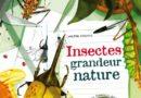 Insectes grandeur nature de Valter FOGATO, illustré par Isabella GROTT